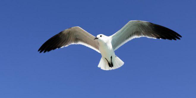 Calcul distance à vol d'oiseau entre 2 villes : comment le faire ?